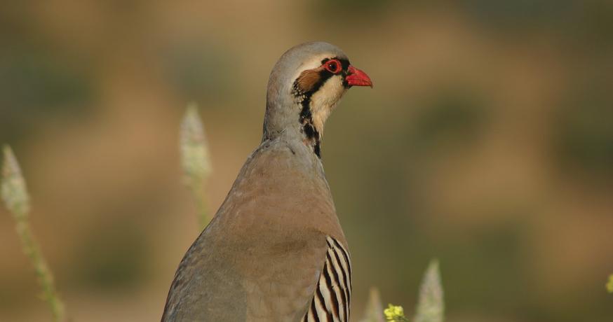 Hunting Area Nidze - Bird Game